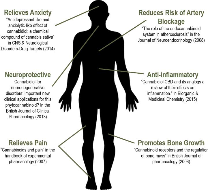 How Does CBD Work In The Body
