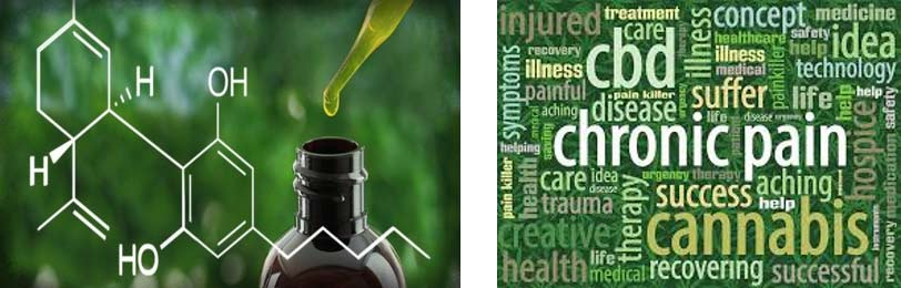 CTFO CBD Hemp Oil business