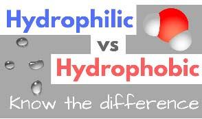 CBD Oil Hydrophilic Versus Hydrophobic