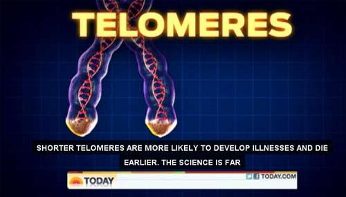 Image of telomeres